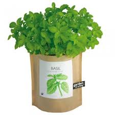 Basil in a bag